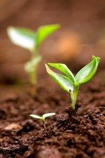 kiełkujące nasiona
