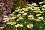 kwiaty w ogrodzie